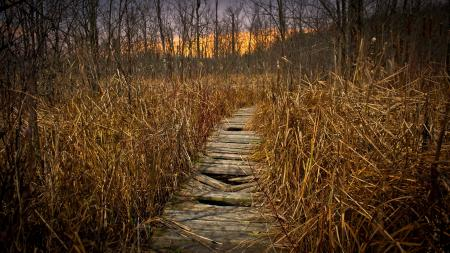 Фотографии осень, природа, мост, пейзаж