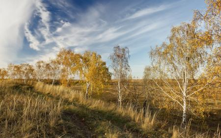 Обои дорога, поле, осень, пейзаж
