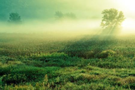 Картинки поле, утро, туман, пейзаж