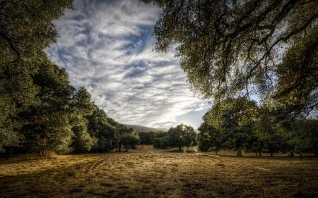 Картинки поле, деревья, пейзаж