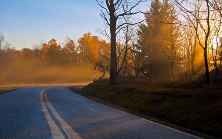 Обои дорога, осень, утро, пейзаж