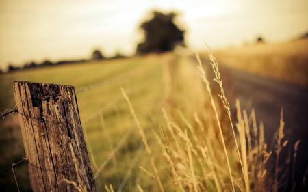 Обои забор, дорога, лето, пейзаж