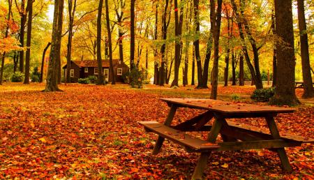 Обои nature, house, bench, forest