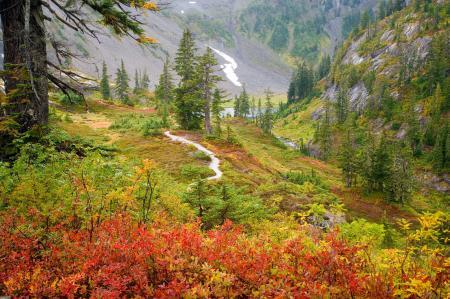 Заставки пейзажи, деревья, кусты, трава