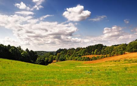 Картинки пейзажи, фото, трава, деревья