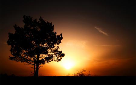 Фотографии пейзажи, дерево, деревья, свет
