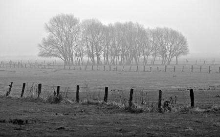 Фото пейзажи, фото, деревья, туман