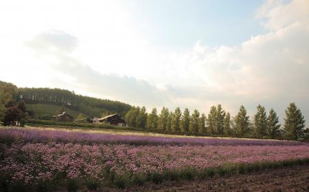 Фотографии поле, цветы, дома