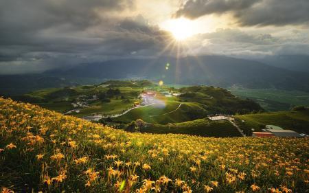 Фотографии поле, цветы, холм, солнце