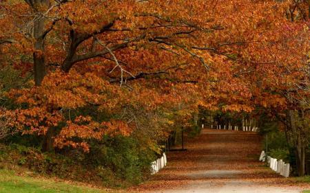 Картинки осень, деревья, парк, листья