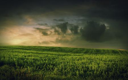 Заставки трава, поле, тучи, небо
