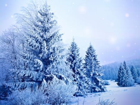 Фото зима, мороз, снег, деревья
