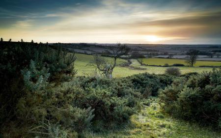 Заставки поле, природа, пейзаж