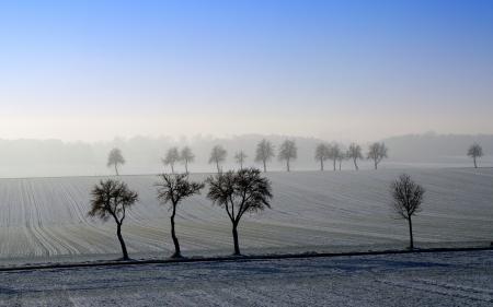 Картинки утро, поле, деревья, пейзаж