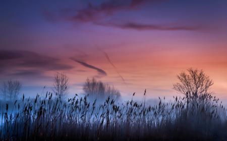 Фото закат, туман, камыш, пейзаж