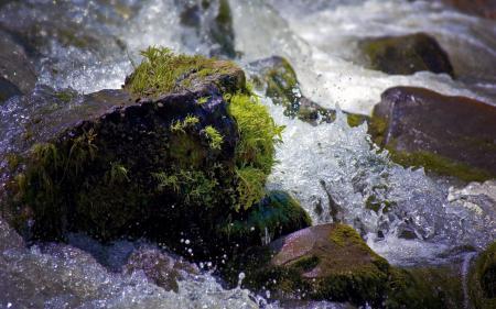 Заставки пейзаж, природа, вода, мох