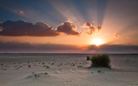 Фото пустыня, песок, кустарник, небо