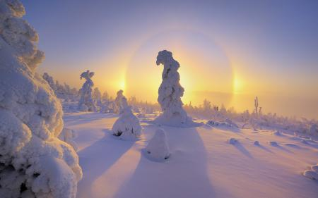 Картинки зима, снег, елки, рассвет
