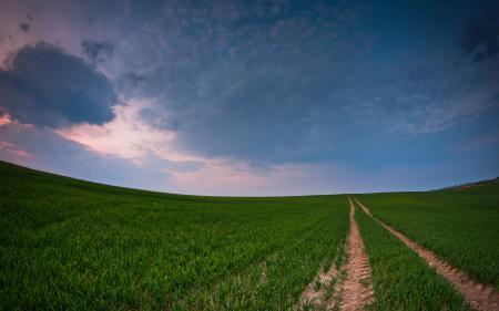 Фотографии дорога, след, трава, небо