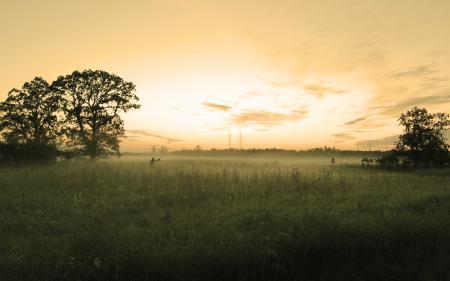 Обои трава, деревья, вечер, провода