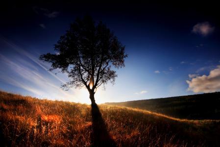 Обои дерево, свет, трава