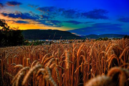 Картинки поле, пшеница, закат, небо