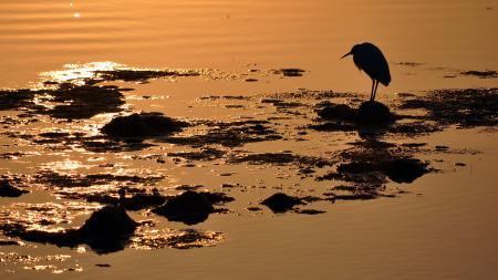 Фото закат, птица, вода, природа