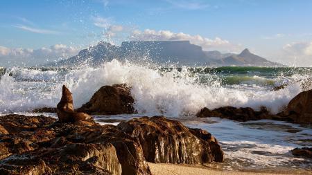 Фотографии море, волны, тюлень, природа