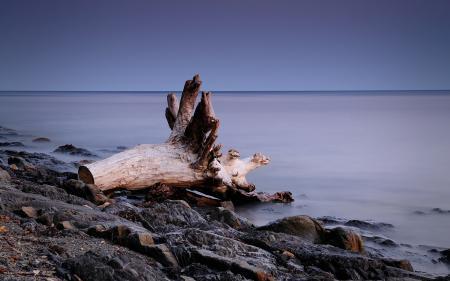 Фотографии коряга, берег, камни, море
