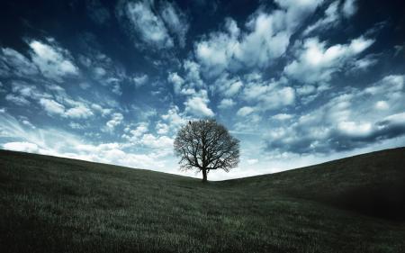 Фото природа, пейзажи, дерево, деревья