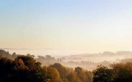 Заставки деревья, туман, утро, осень