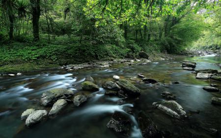 Фотографии река, лес, лето