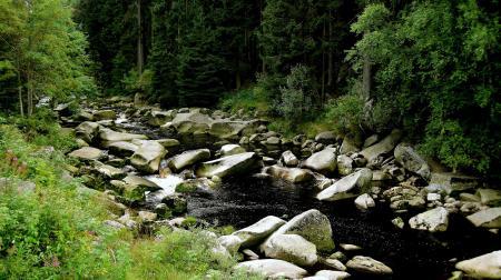 Фотографии лес, река, камни, лето