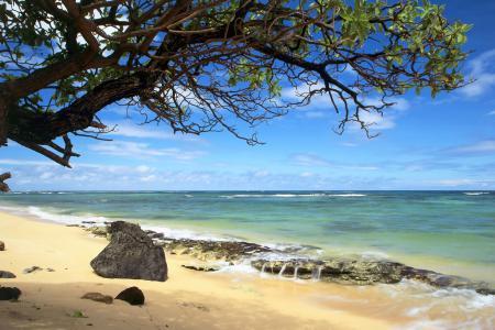 Картинки море, песок, дерево, волны