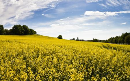 Фотографии пейзаж, природа, поле, поляна