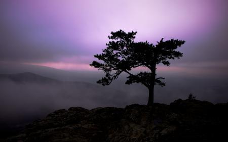 Картинки природа, пейзаж, сумерки, дерево