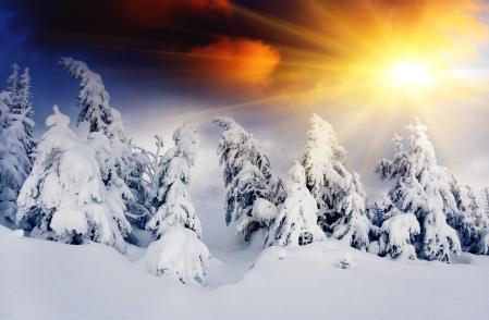 Обои зима, лес, солнце, снег