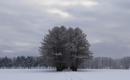Фото Зима, снег, лес, деревья
