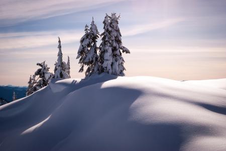 Фотографии Зима, деревья, ели, снег