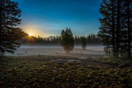 Фото горы, лес, деревья, утро