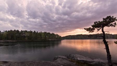 Заставки лес, озеро, дерево, камни