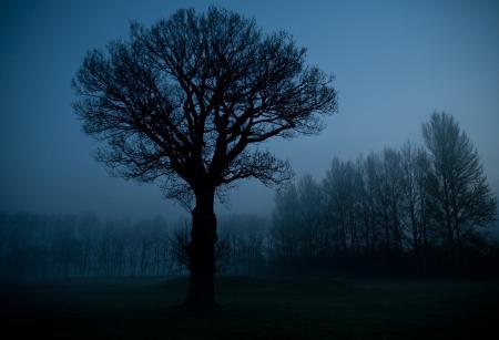 Фотографии природа, ночь, небо, деревья