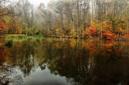 Картинки небо, туман, лес, пруд
