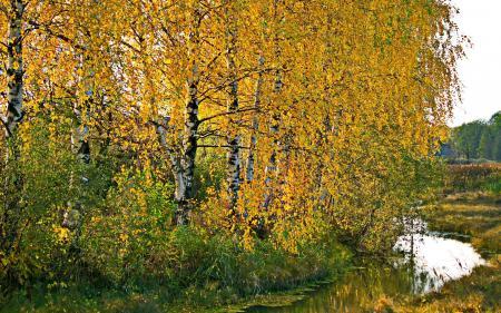 Фото осень, берёзы, природа