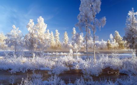 Картинки зима, снег, иней, деревья