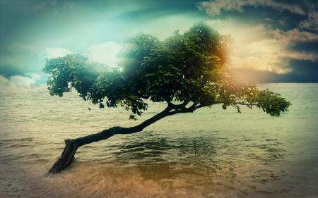 Картинки Дерево, вода, небо, облака