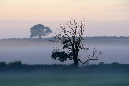 Фотографии трава, деревья, дерево, туман