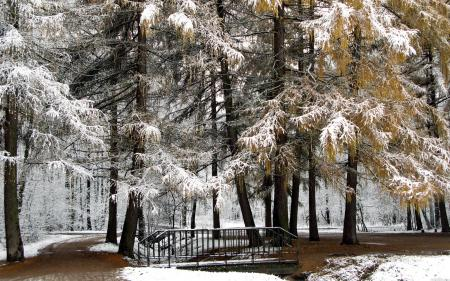 Фотографии зима, снег, парк, деревья