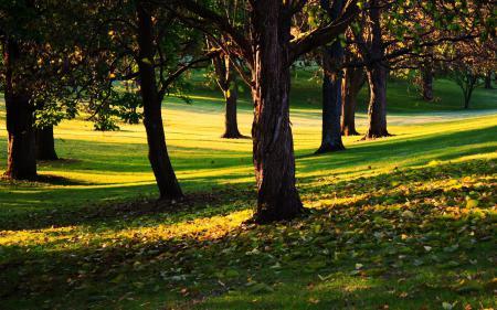 Картинки деревья, парк, сквер, начало осени