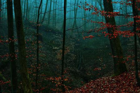 Заставки лес, вечер, туман, овраг